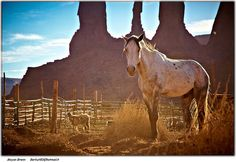 A horse inside the desert of Arizona, Monument Valley Navajo tribal park by © Moyan Brenn via Flickr.com