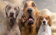 Pirotecnia en fiestas decembrinas afecta a las mascotas - http://www.notimundo.com.mx/salud/pirotecnia-afecta-las-mascotas/