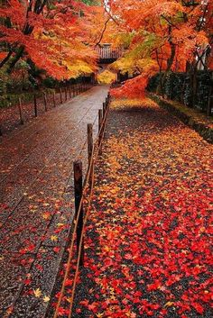 Fall Road Pathways, Falling Leaves, Japan Photo, Maple Leaves, Tree Leaves, Autumn Leaves, Maple Tree, Fall Pics, Fall Pictures
