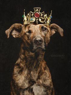 Elke Vogelsang - dog - crown