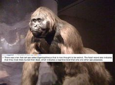 Dammit, I KNEW I shouldn't have watched planet of the apes...I may never sleep again.
