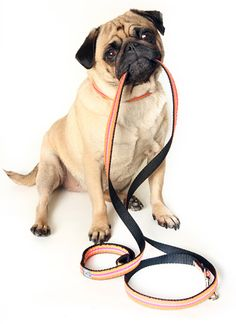 Pet Obedience Training Classes - Petcetera