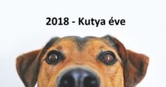 Free Image on Pixabay - Dog, View, Sweet, Animal Portrait Sweet Animal, Great Dog Names, Virginia Vacation, Education Canine, Pet Odors, Pet Urine, Dog Training Tips, Stock Foto, All Dogs
