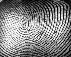 fingerprint identity series