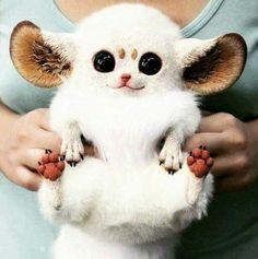 Animals With Weird Ears 8