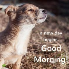 Good Morning Card with image of a dog looking at the sun