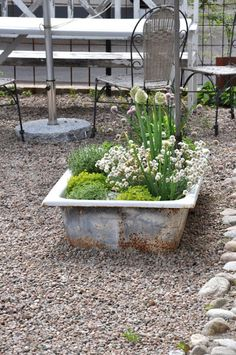 Repurposed cast iron sink becomes a industrial looking planter.