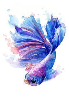 Do you have an interest in freshwater ornamental fish? Well, as an ornamental freshwater fish lovers, I'm sure that you were familiar with Betta fish. Fish Drawings, Animal Drawings, Art Drawings, Betta Fish Tattoo, Fish Art, Watercolor Paintings, Watercolor Fish Tattoo, Watercolor Mermaid, Painting & Drawing