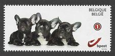 french bulldog post stamp - Szukaj w Google