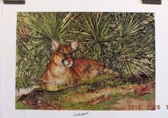 ARTISTS-PROOF-FLORIDA-ENDANGERED-PANTHER-LEWIS-WATKINS-SIGNED
