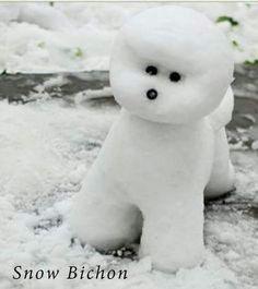 Snow bichon- Ha Ha too cute
