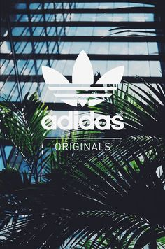 Adidas is bae