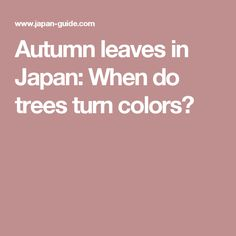 Autumn leaves in Japan: When do trees turn colors?