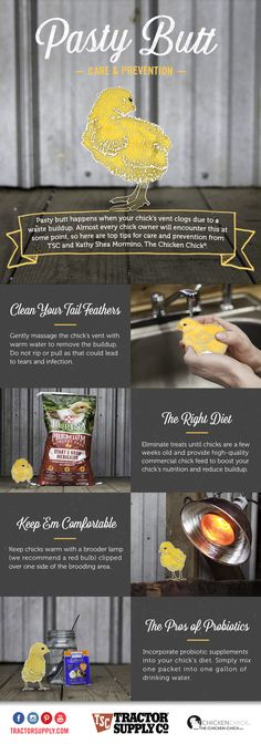Keep your new chicks healthy with these Pasty Butt care and prevention tips from TSC + Kathy Mormino, the Chicken Chick