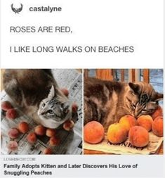 32 Cat Memes To Ensure You Have A Fabulous Caturday - World's largest collection of cat memes and other animals Funny Animal Photos, Cute Funny Animals, Animal Memes, Cute Baby Animals, Funny Cute, Animals And Pets, Cute Cats, Animal Pictures, Hilarious