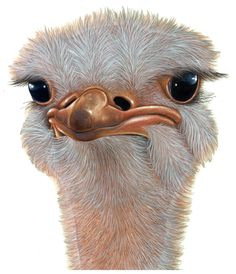 Ostrich face Ostriches, 3d Pictures, Ex Libris, Just Kidding, Wild Birds, Beautiful Birds, Owl, Painting, Animals