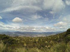 Frailejon Las Barbas del Abuelo Volcan Galeras. Altitud4276 msnm Cordillera Central de los Andes