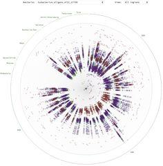 Роза кишечных бактерий — новый формат визуализации геномных данных, придуманном в Лаборатории данных специально для биоинформатиков из НИИ ФХМ