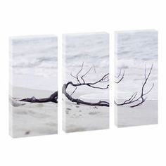 Strandgut- Kunstdruck auf Leinwand - dreiteilig -je 40cm*80cm