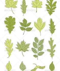 Collection of Green Leaves #GraphicRiver Collection various leaves: oak tree, birch, maple Created: 14May13 GraphicsFilesIncluded: PhotoshopPSD #JPGImage #VectorEPS #AIIllustrator #TIFFImage Layered: No MinimumAdobeCSVersion: CS Tags: birch #botany #decor #doodle #ecologic #elegant #element #foliage #graphic #green #handdrawn #herbal #isolated #leaf #leaves #maple #nature #oak #organic #outline #plant #retro #season #sketch #spring #summer #vector