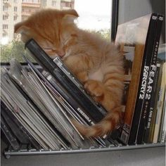 Kitty book nook