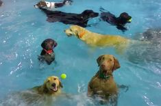 A Weimaraner who can't swim when the camera's on him is our top pick for this week's Funny Dog Videos!
