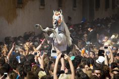 Gimme five: Ein Schimmel bäumt sich in der Menge auf. In Ciutadella auf Menorca...