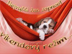 Beautiful Gif, Happy Weekend, Good Night, Christmas Bulbs, Animals, Nighty Night, Animales, Christmas Light Bulbs, Animaux