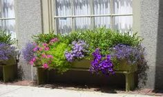 flower containers that stand under a window.priceless (from the streets of salem) Window Box Flowers, Window Boxes, Flower Boxes, Flower Stands, Container Flowers, Oahu, Garden Inspiration, Windows, Green