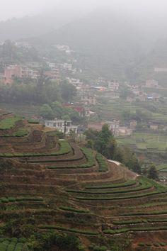 The Tieguanyin Tea Fields of Daping, Anxi: Meeting Master Zhang | Verdant Tea