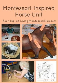 Lots of Montessori horse printables and  resources plus ideas for Montessori-inspired horse activities from around the blogosphere