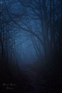 Forest: This shows a somewhat abstract shot of a dark forest. The darkness adds to the mystery of the picture. Haunted Forest, Magical Forest, Dark Forest, Misty Forest, Blue Aesthetic, Mists, Serenity, Paths, Nature Photography