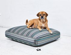 IMANII the dog collection - limitiertes Design für Hunde