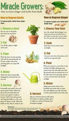 Grow Garlic or Ginger.