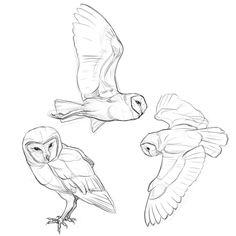Quick sketch of barn owls mid-flight