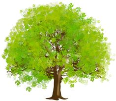 Large Green Tree PNG Clipart