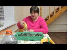 Секреты выращивания земляники. - YouTube