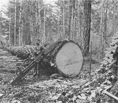 Logger with drag saw and tools :: Orcas Island Heritage