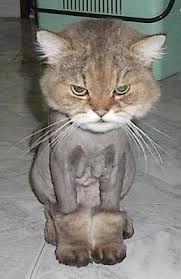 """Résultat de recherche d'images pour """"drole de chat"""""""