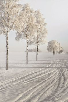Snow covered trees ..