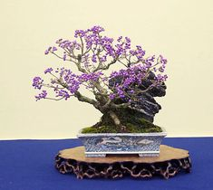 Purple berries! Fruit bearing bonsai in elaborate, decorative Chinese style pot on root stand. If anyone knows what species this is please post!!!