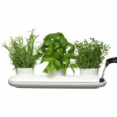 Safe Herbs & Spices for dogs: Basil, oregano, parsley, rosemary, thyme, peppermint and more.