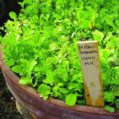 This shows that one or two large containers will grow enough salad greens to feed your family.