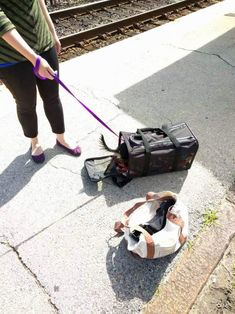 This is how I trained a small dog to ride in a bag | Alaina Mabaso's Blog