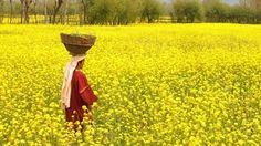 Mustard Fashion Drawing Dresses, Ladies Day, Pakistan, Beautiful Places, India, Photography, Mustard, Culture, Beauty