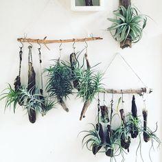 드리프트우드행어 : PLANT ODD