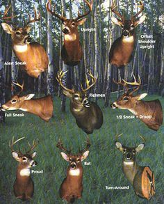 Deer Mounting Options, i like proud or upright Whitetail Deer Hunting, Deer Hunting Tips, Hunting Girls, Bow Hunting, Hunting Stuff, Hunting Decal, Hunting Humor, Deer Shoulder Mount, Deer Mounts