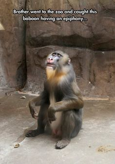 Rafiki Just Realized Simba's Alive