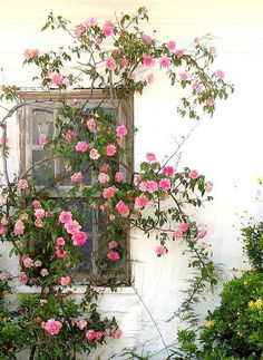 Flower and vine covered window