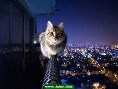 Furchtlose Katze ist furchtlos